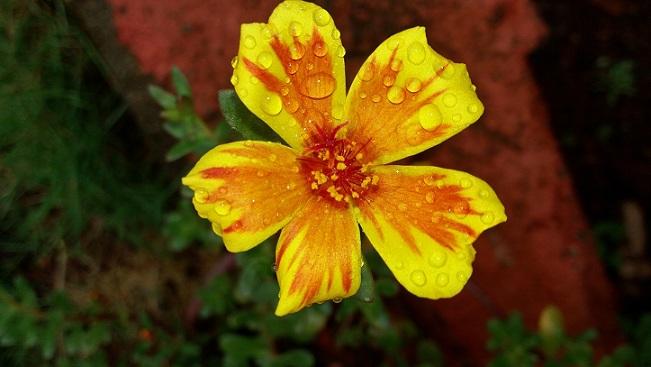 Offer from Panthastha September Offer - Book 2 N, Get 3rd FREE